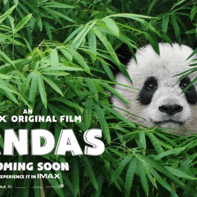 Celebrate International Panda Day!