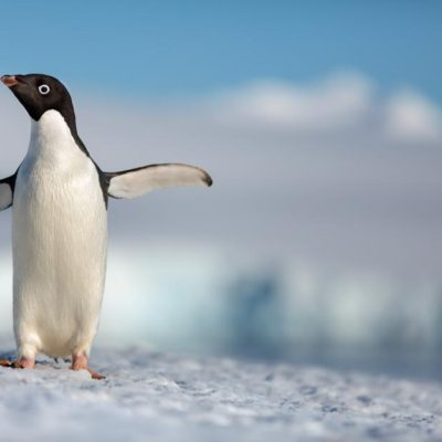 Disneynature's PENGUINS First Trailer!