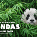 PANDAS Return to IMAX~ Win Tickets!